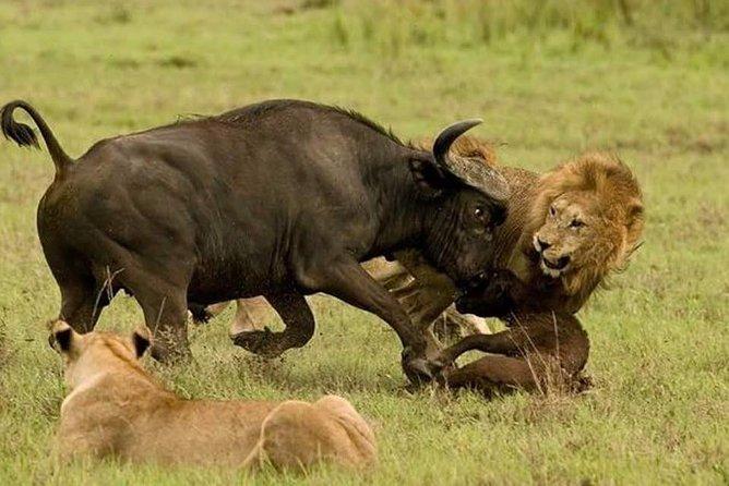 Tanzania Special Wildeebests migration Safaris -9days/8nights