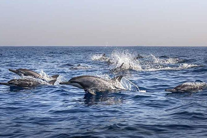 Private Package Multi Tours 4 Days-Watching Dolphin-Lempuyang The Gate Of Heaven
