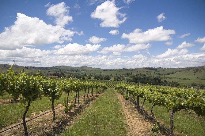 Lines of Vines on Zepher Tours