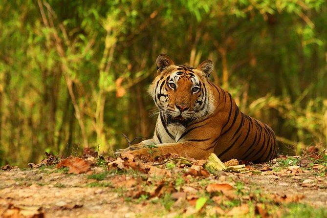 3-Hour private Safari in Kanha National Park
