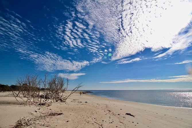 Barrier Island Beach and Wildlife outing