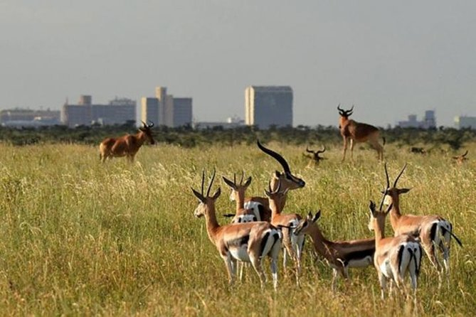 Early Morning Group Joining Game Drive In Nairobi National Park photo 7