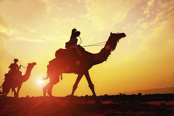 Camel & Quad