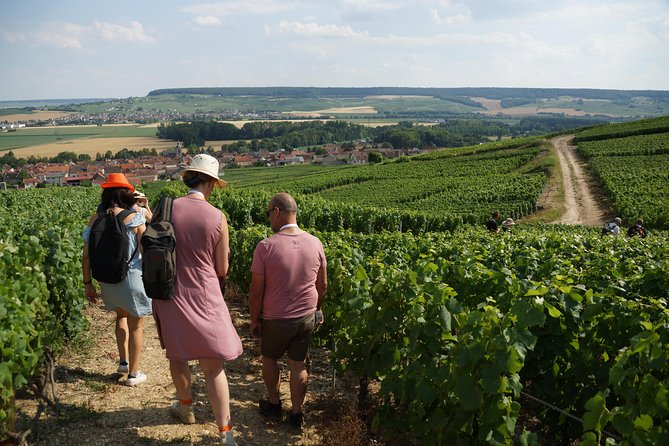 Gourmet walk in the heart of the vineyards with Champagne tasting near Epernay