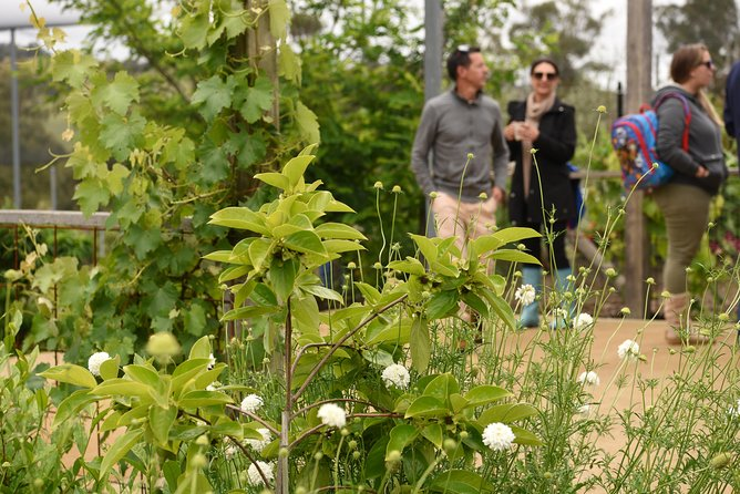 Guided Edible Forest Tour