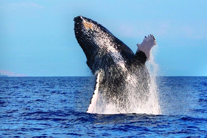 West Oahu Whale-Watching Excursion