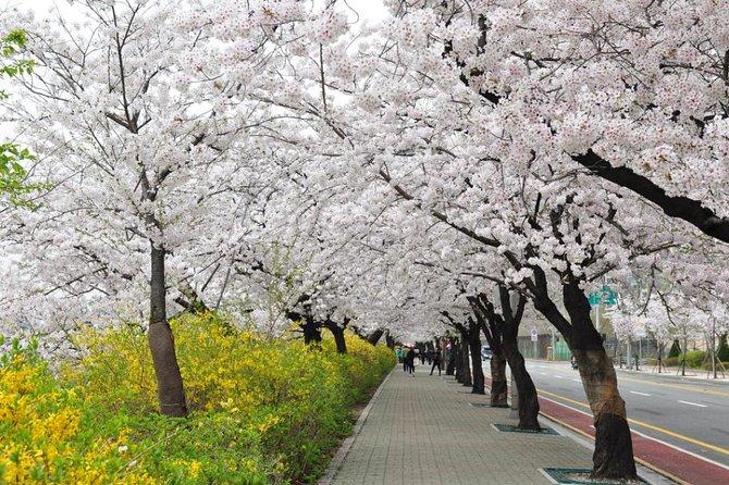 Spring 3 days Seoul & Mt Seorak Cherry blossom with Nami Island on 7 to 14 Apr