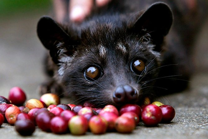 Bali Sightseeing and Luwak Coffee Plantation Tour
