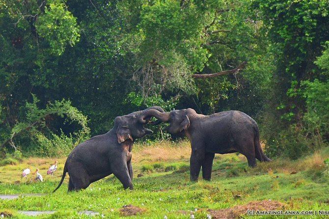 3-Day All Inclusive Mobile Camping in Wasgamuwa National Park