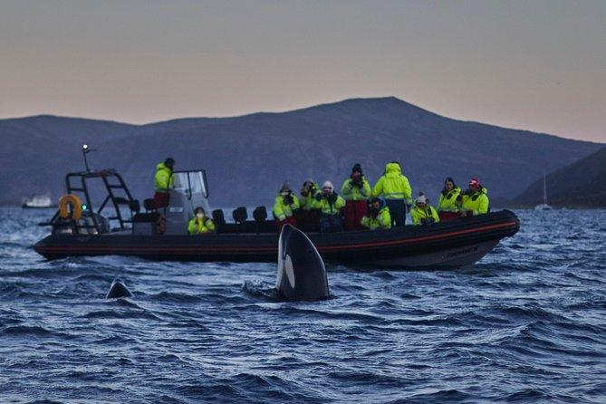Whale watching in Magic Skjervoy!