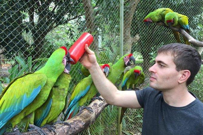 Volunteering animal Rescue Costa Rica