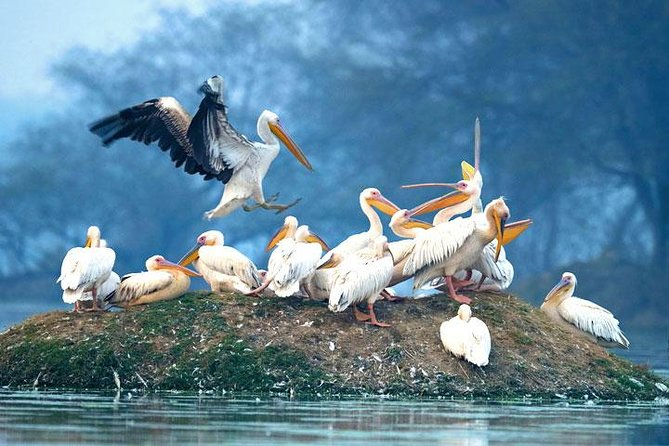 Private Tour to Bharatpur from Agra