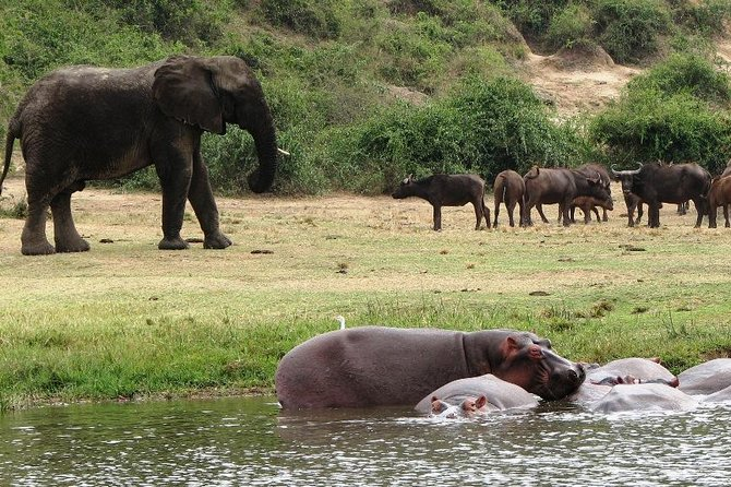 2 Days Safari To Queen Elizabeth National Park with Cruise