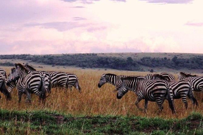 5 Day Kenya Safari