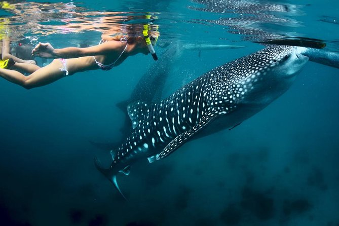 Oslob Whale Shark and Kawasan Falls Day Tour photo 6