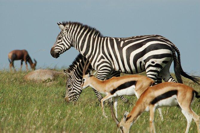 6 Days Amboseli, Lake Naivasha and Maasai Mara Special offer