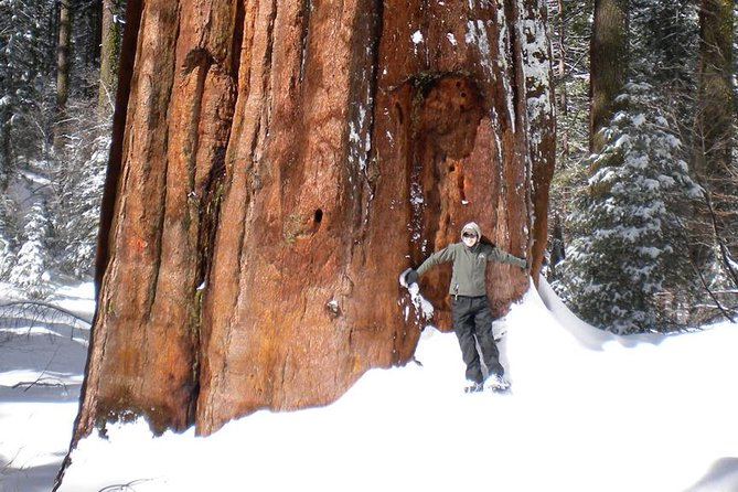 Giant Sequoia Snowshoe and Yosemite Valley Waterfalls Adventure