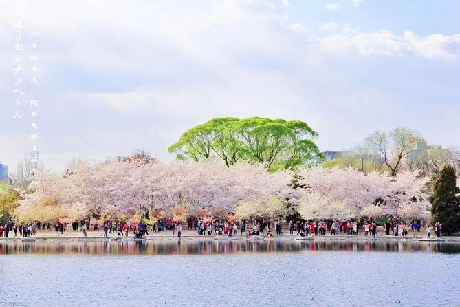 Beijing Spring Cherry Blossoms Park with Hot Spring Spa Seasonal Tour