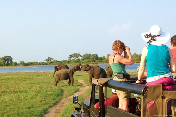 Polonnaruwa Ancient City and Jeep Safari, Day Tour From Trincomalee.