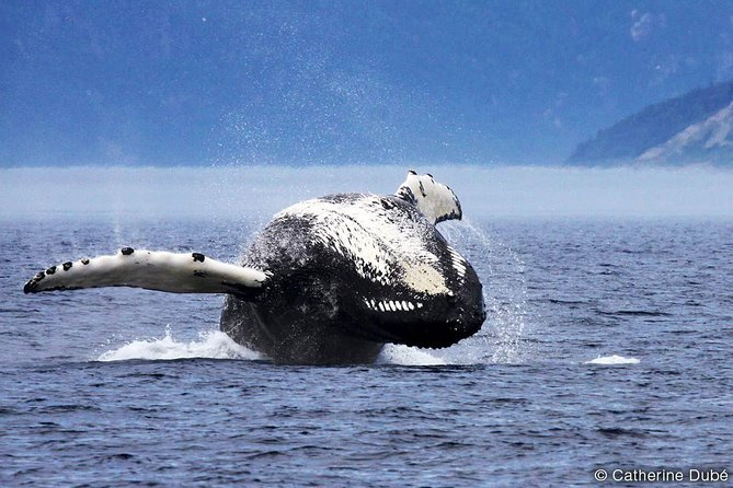 Whale Watching Cruise From Tadoussac or Baie-Ste-Catherine