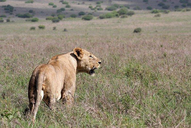 Airport Transit Tour to Nairobi National Park, Elephant Project & Girrafe Center