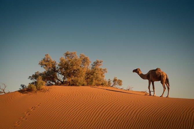 4 Days Merzouga Desert from Marrakech