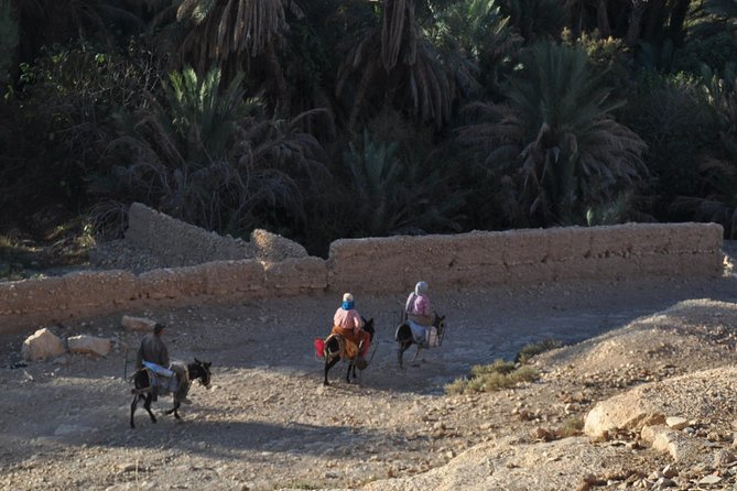 Mount Zalagh Hiking and Trekking Day Trip from Fez