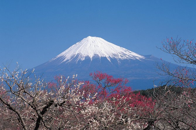 Mt. Fuji 5th Station, Lake Kawaguchi & Seasonal Fruits Picking from Tokyo photo 4