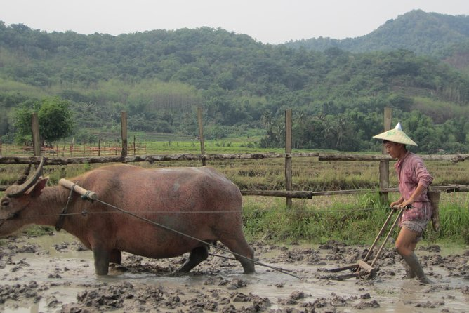 Half Day Living Land Farm from Luang Prabang (L) photo 7