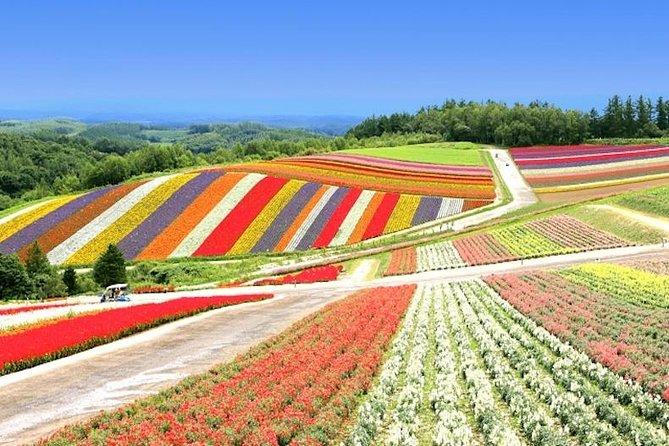 Os principais pontos turísticos de Hokkaido na fazenda Tomita, Shikisai no Oka em Biei & Blue Pond!