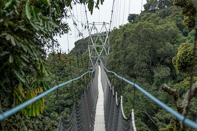 2 Days Canopy wallk and Waterfalls Hike in Nyungwe National Park