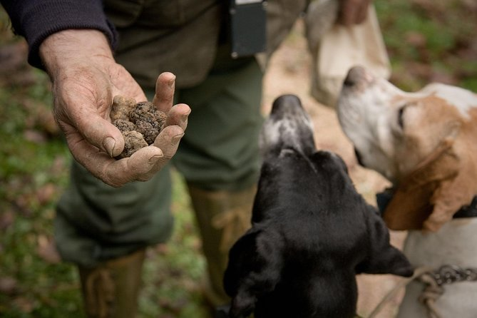 Tuscany: Truffle Hunting with Gourmet Truffle Lunch in a Winery of San Gimignano