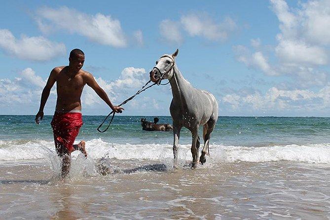 Horseback Riding at Atlantic Shores Beach
