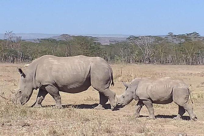 Early Morning Group Joining Mini Safari To Nairobi National Park