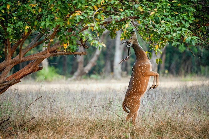 Private Ranthambore Day Trip from Jaipur
