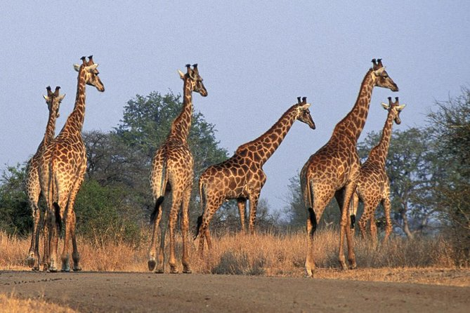 Private Shuttle Service from Johannesburg to Kruger National Park photo 6