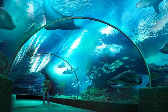 SEA LIFE Bangkok Ocean World & Madame Tussauds Combo Ticket