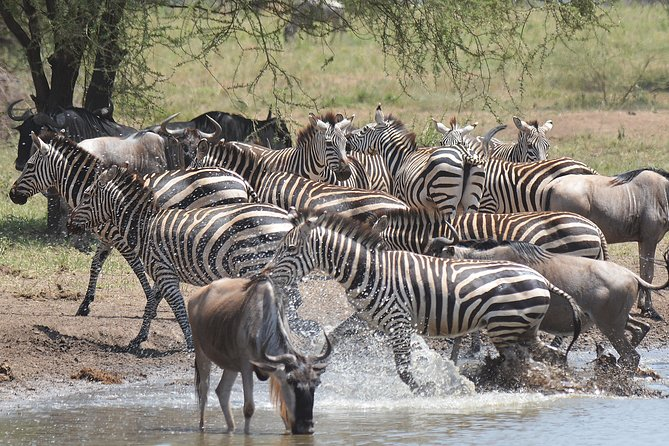 5 Days Tanzania Camping Safari photo 2