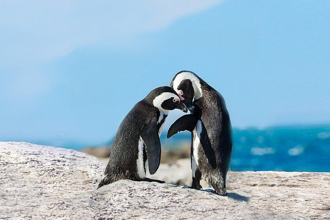 1-Day Cape Point & Penguins Small Group Tour from Cape Town