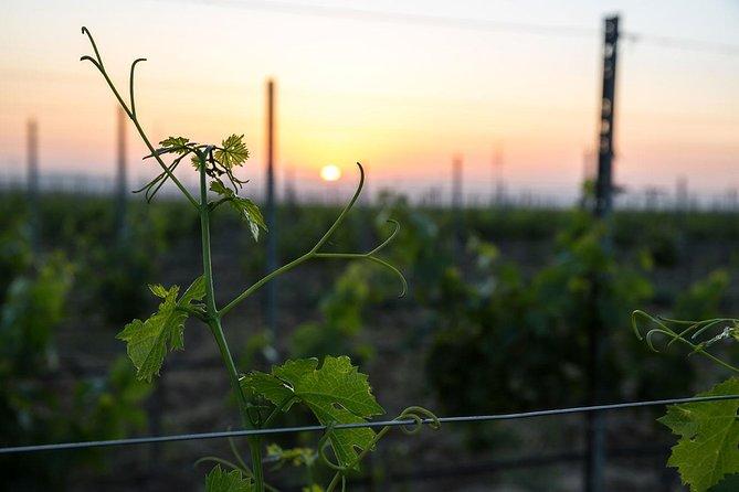 Baku Wine Tour