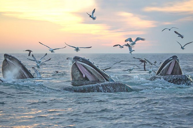 Boston Super Saver: Whale-Watching Cruise & New England Aquarium Admission