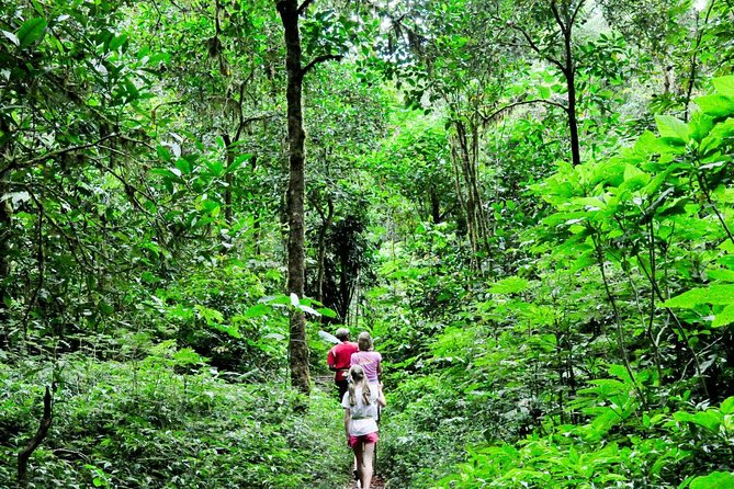 Jungle Trekking and Tamblingan Lake Canoeing in Bali Beautiful Rainforest