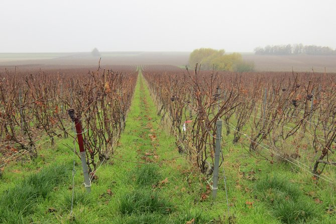 Let's take a walk in the vineyards