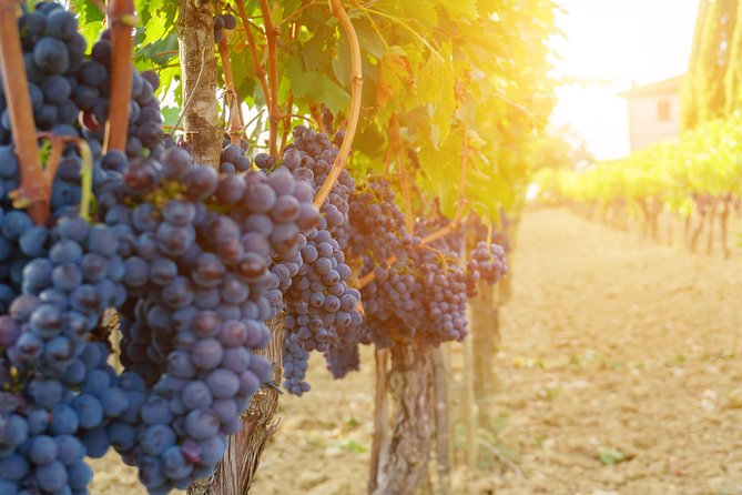 Private Vineyard Walk & Roman Wine Tastings