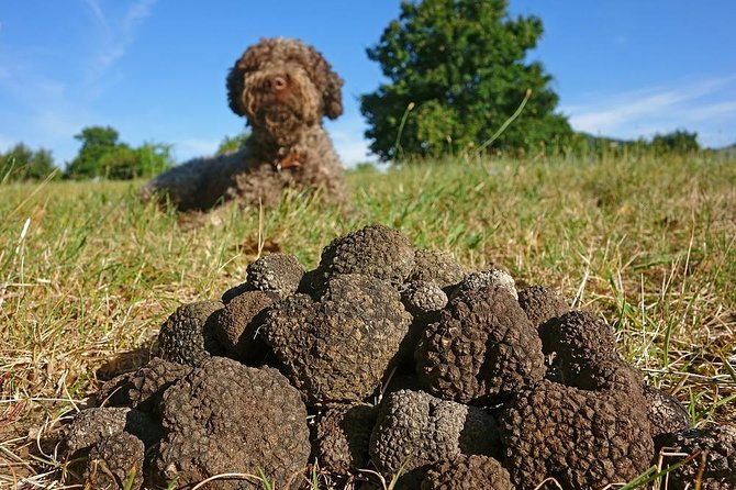 Truffle Hunting With Dog And Hunter, Food Tasting Included- Umbria, Italy