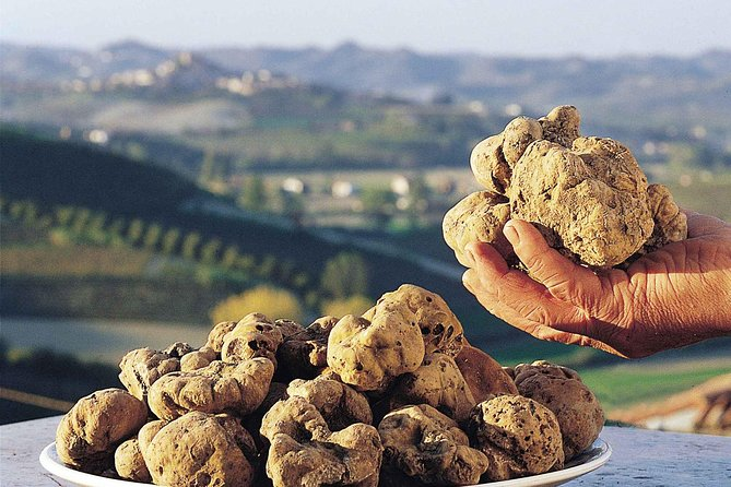 Day Trip: Truffle Hunting With Lunch + Vinyard Tour By Horse & Carriage