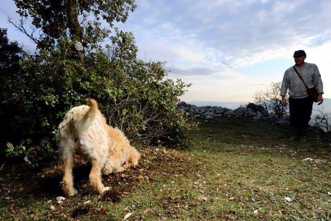Day Trip :truffle Hunting With Lunch + Wine Tour With Tasting