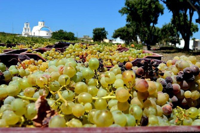 Santorini Semi Private Wine Tour