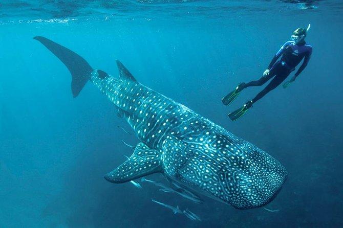 Schwimmen mit Walhai und Meeresschildkröten