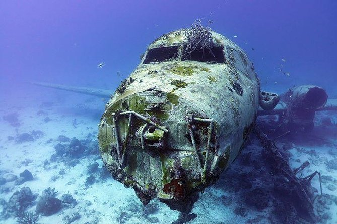 Aruba 1-Tank guided Dive for certified divers with rental equipment
